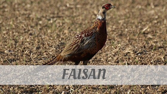 Pheasant Pronounce How an EXPERT Would Sa...